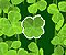 Lucky Clover -  Luck Game