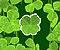 Lucky Clover -  Luck Game